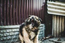 perestat_boyatsya_sobak